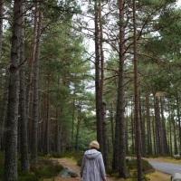Abernethy Landscapes